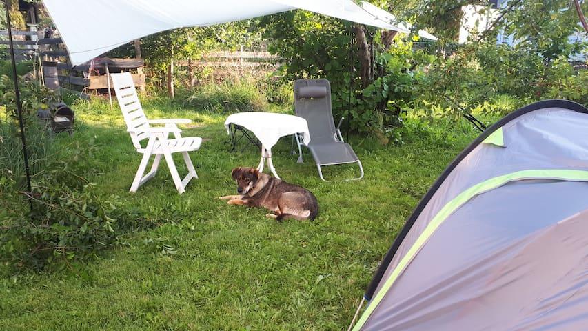 Waldauszeiten-Forestpod (tent in garden)