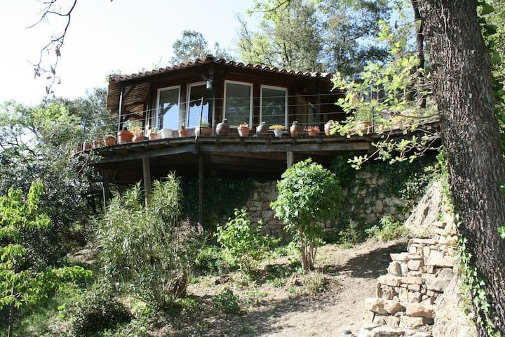 Maisonnette, Terrasse, piscine nature, Internet.