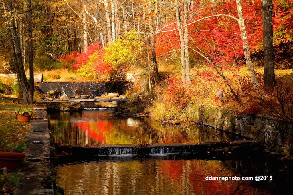 The autumn colors are stunning on the trout stream.