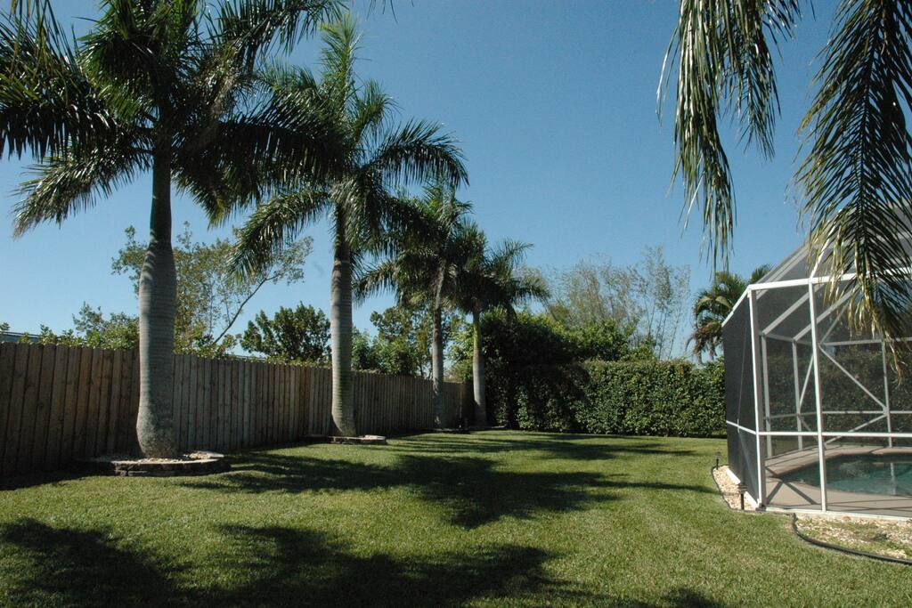 Beautiful Royal palms trees