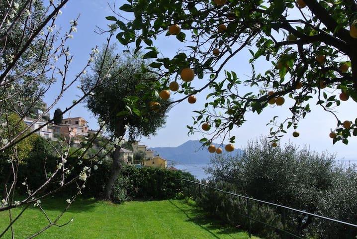 Pieve Paradiso, code: 010043 LT- 0007