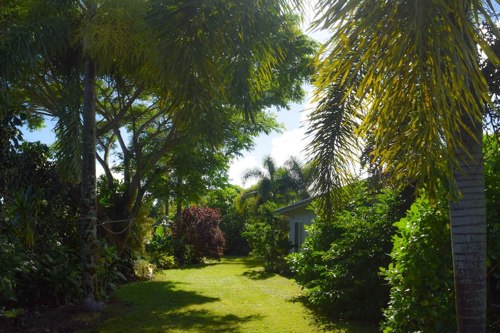 Private, lush yard is loaded with gorgeous tropical plants, including lots of fresh fruits for your enjoyment
