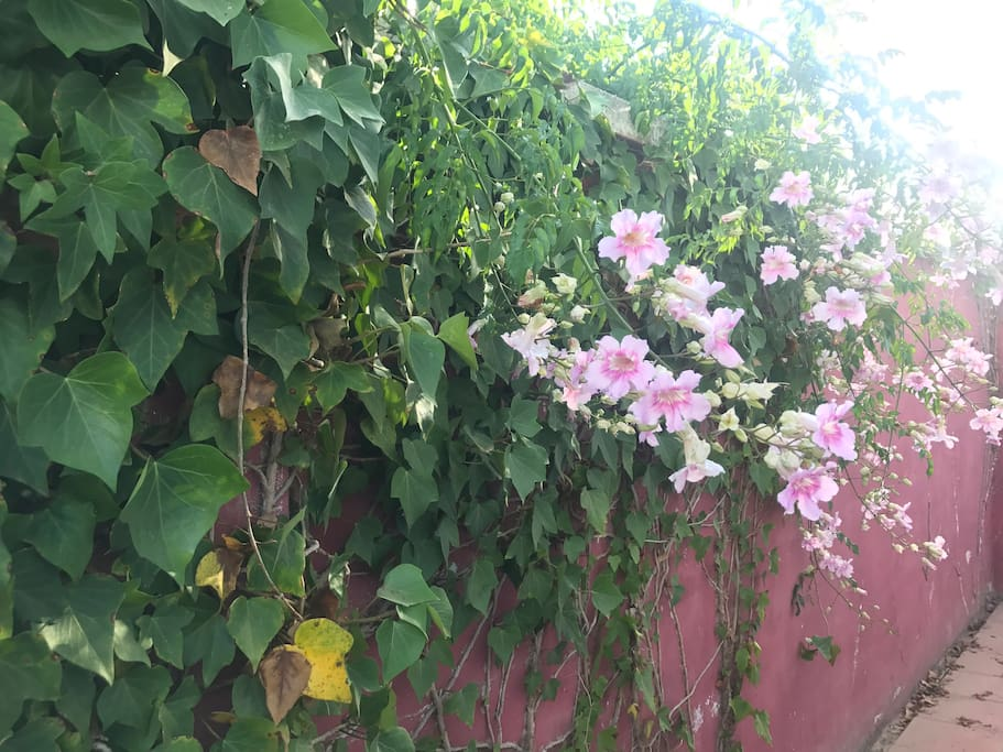 Flores del patio