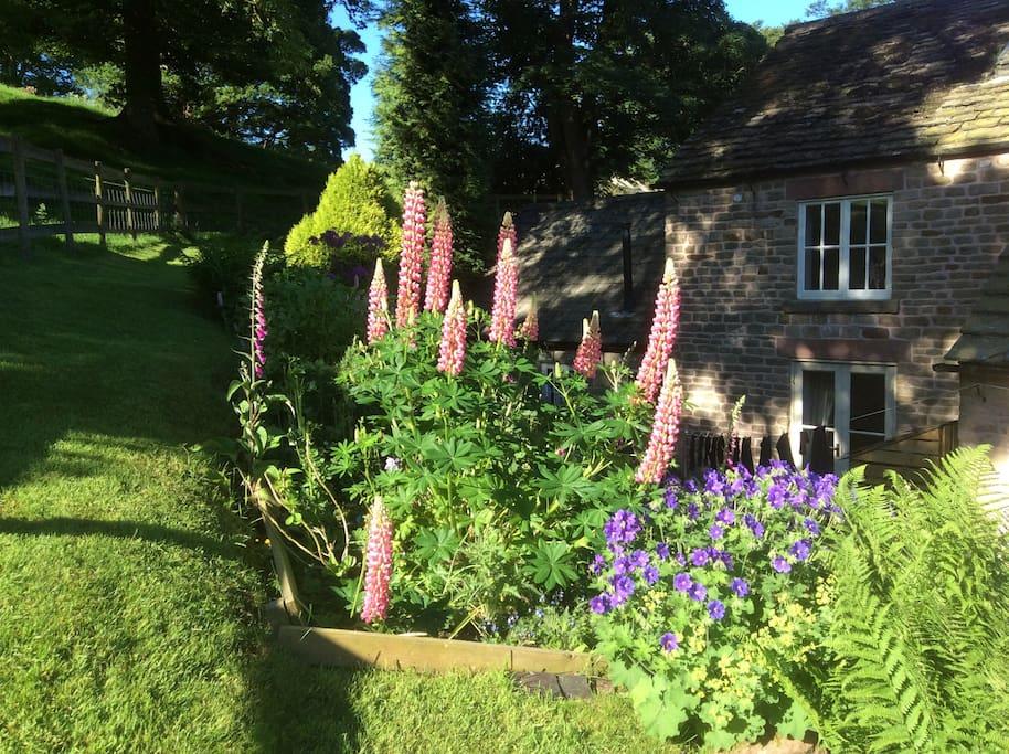 The garden at Ashmount