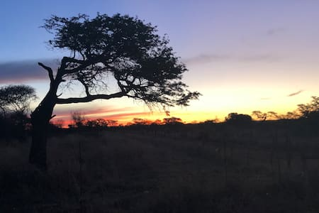 Houtkapper Bush Camp - starry skies and bushveld