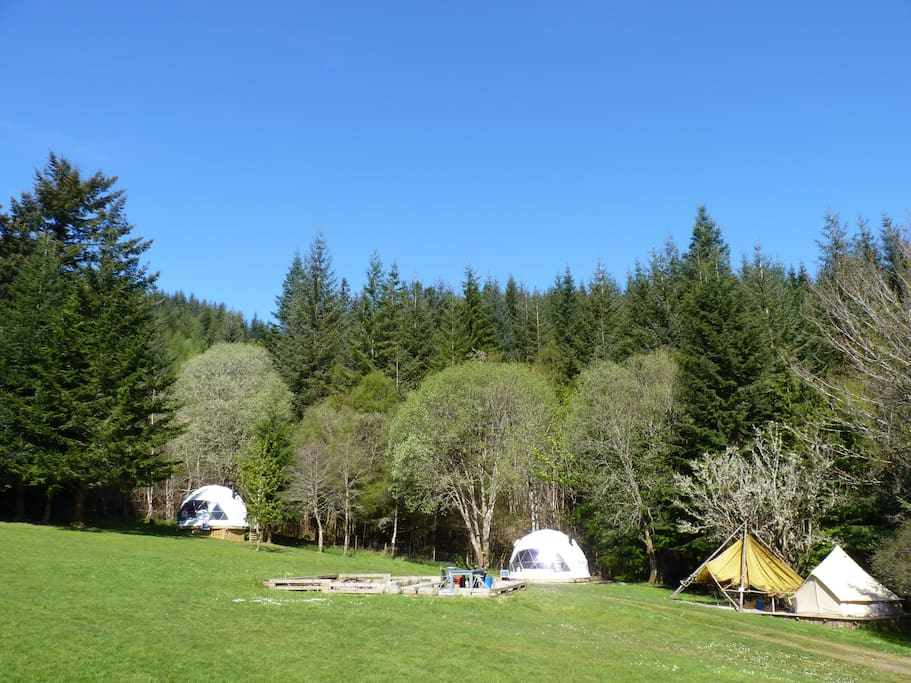 Our Glamping units and woodland setting