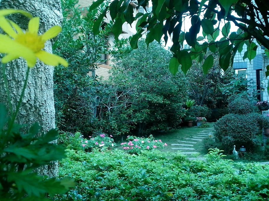 Lush trees and flowers in the garden  花木扶疏滿庭園,  桂花芳齡數十載,