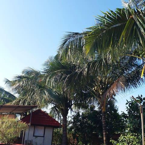 Arihant farm Dapoli | Agro Tourism | Pure Veg