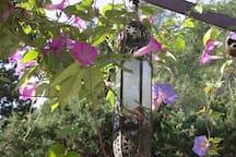 les fleurs l'été