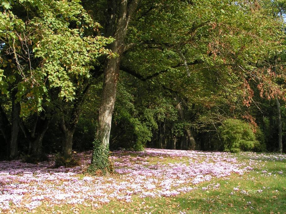 Le grand parc aux arbres centenaires