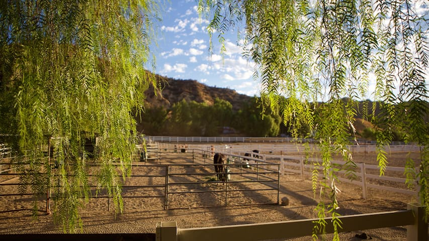 Red Rock Riding Ranch #1 in Castaic