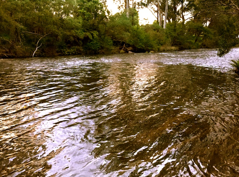 The Yarra River - perfect for swimming, ka