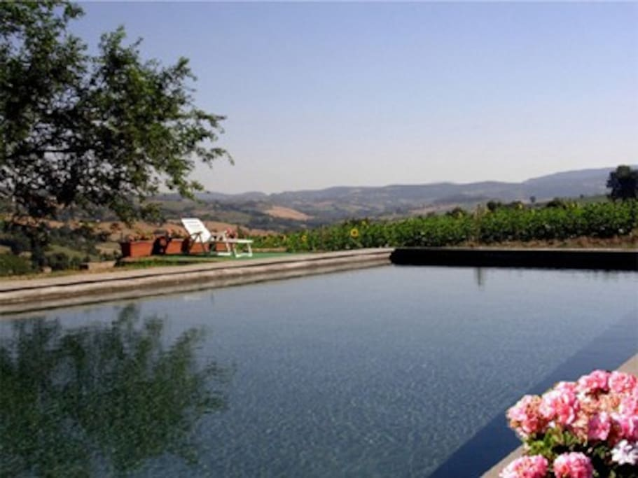 The swimming pool with view