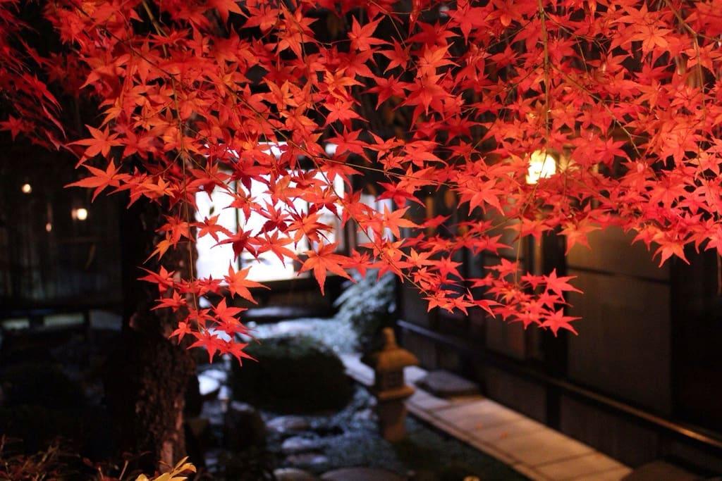 ★お庭の紅葉 11~12月.Nov.~Dec.Autumn leaves in the garden.
