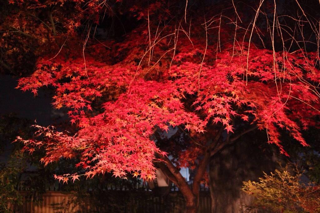 庭の紅葉Nov.~Dec.Autumn leaves in the garden.