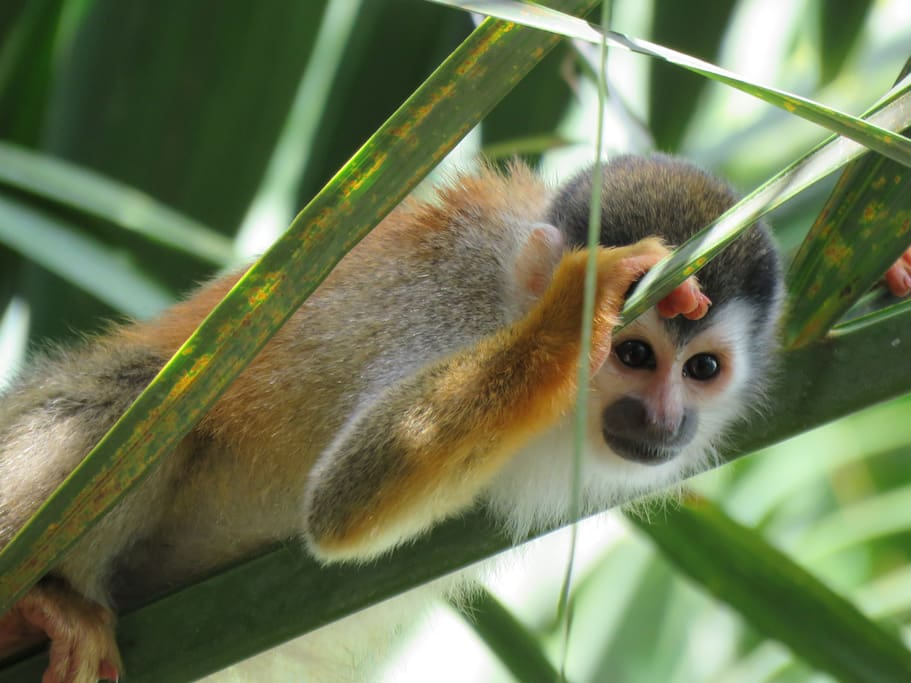Peek-a-boo with a Titi monkey!!