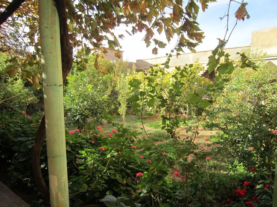 Herb variété de jardin
