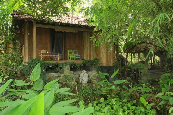 Historical House -  Rice field View, Kitchen, Yoga - Yogyakarta - Rumah