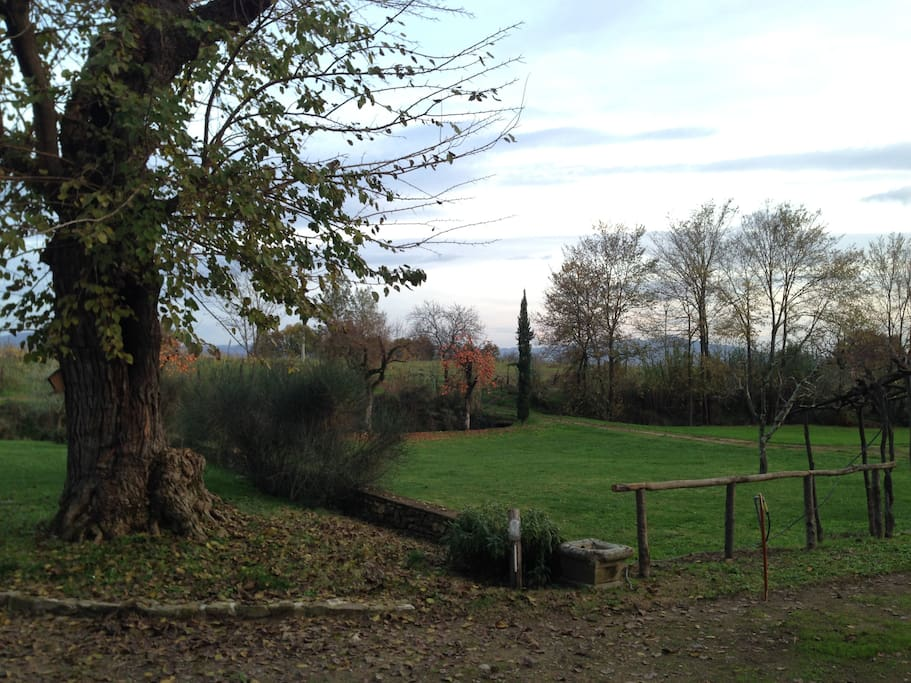 Garden, vineyard, nature walk - Winter Photos