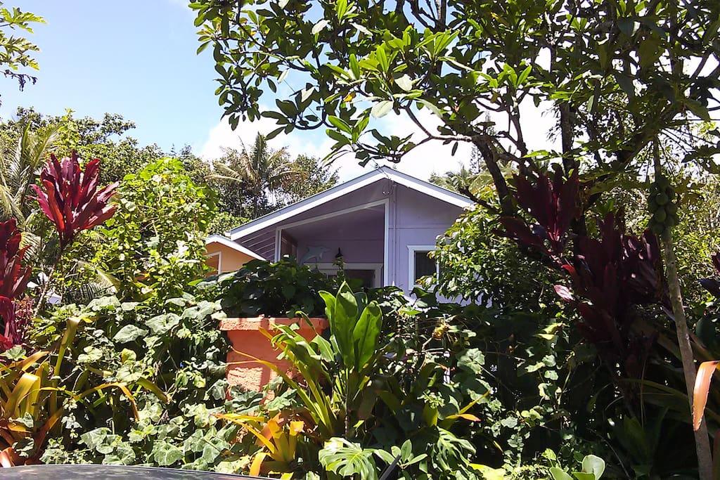WHALE HOUSE AT KEHENA BEACH