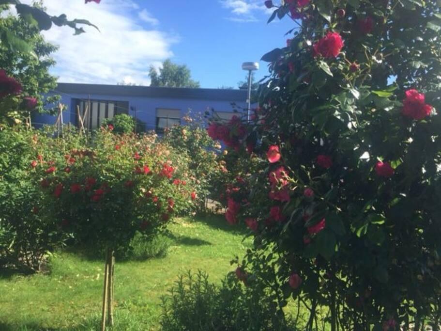 Die Rosengarten