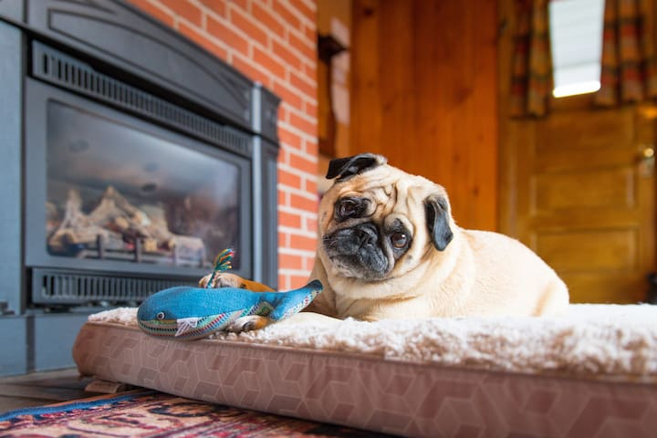 DOG approved! ~ King Bed ~ Fireplaces ~ Bikes