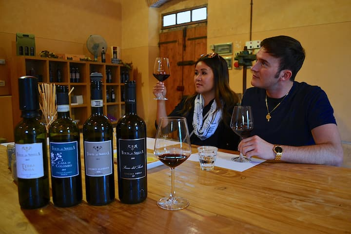 Guided wine tasting at the cellar