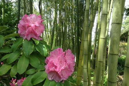 Bamboo Haven - Redmond