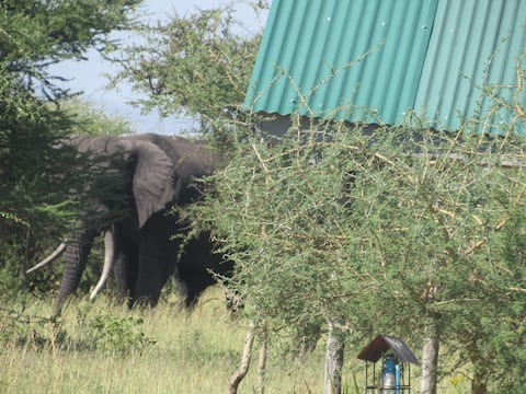 The luxury tented camp of Serengeti