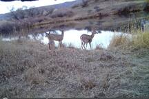 Trout pond in winter with two deer