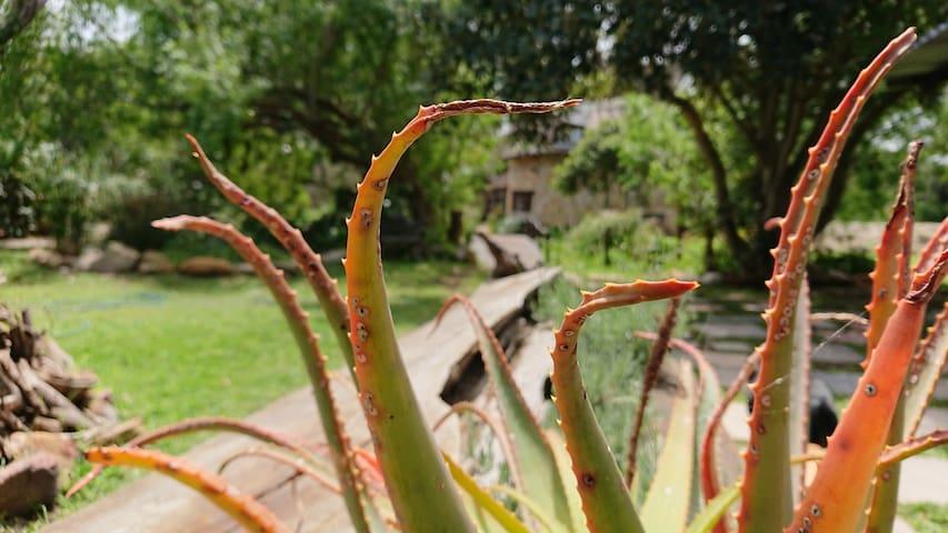 Gumstone Garden - Sunshine