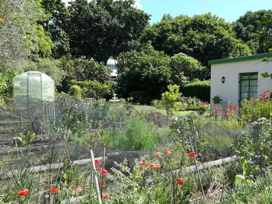 The organic garden onto which the cottage faces.