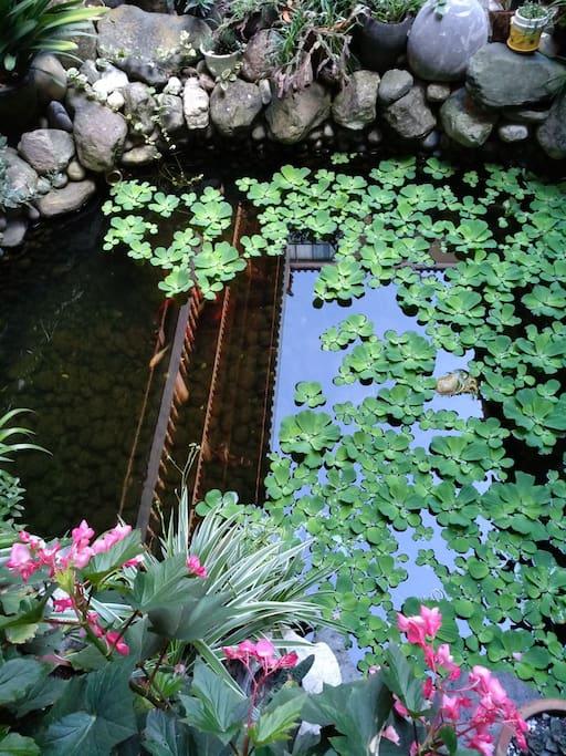 一方见小的池里假山堆砌,鱼儿嬉戏,小池周围的花花草草镶嵌一圈!