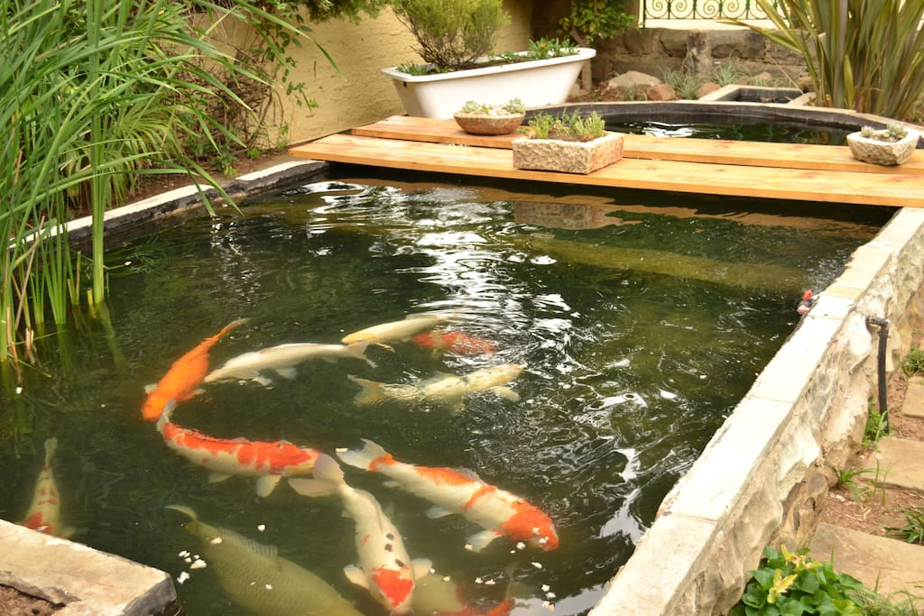 Our small but exquisite Koi pond.
