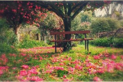 Camellia, en lugn plats att vila på