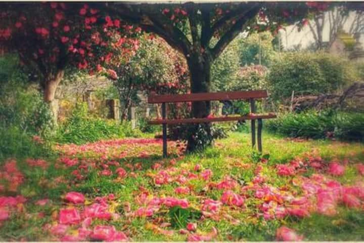Camélia, um espaço tranquilo para repousar