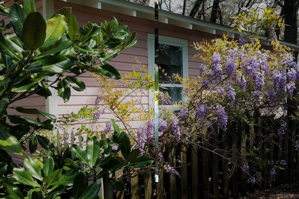Wisteria Cottage Tiny Guest House