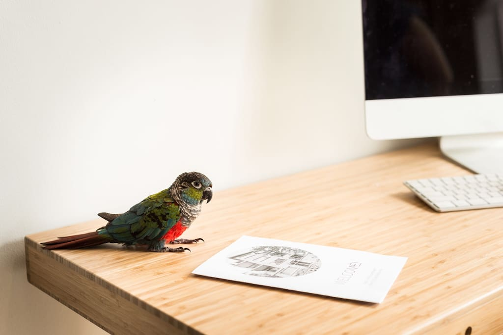 This is our parrot George - she's very friendly, but is also happy to stay in her cage while you are staying with us.