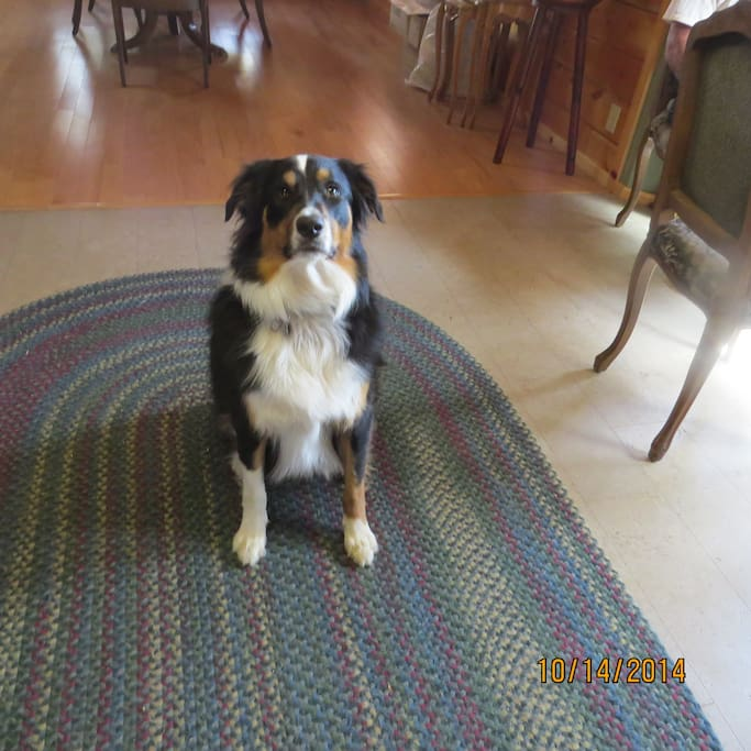 We have a gentle and loving border collie mix who loves company.