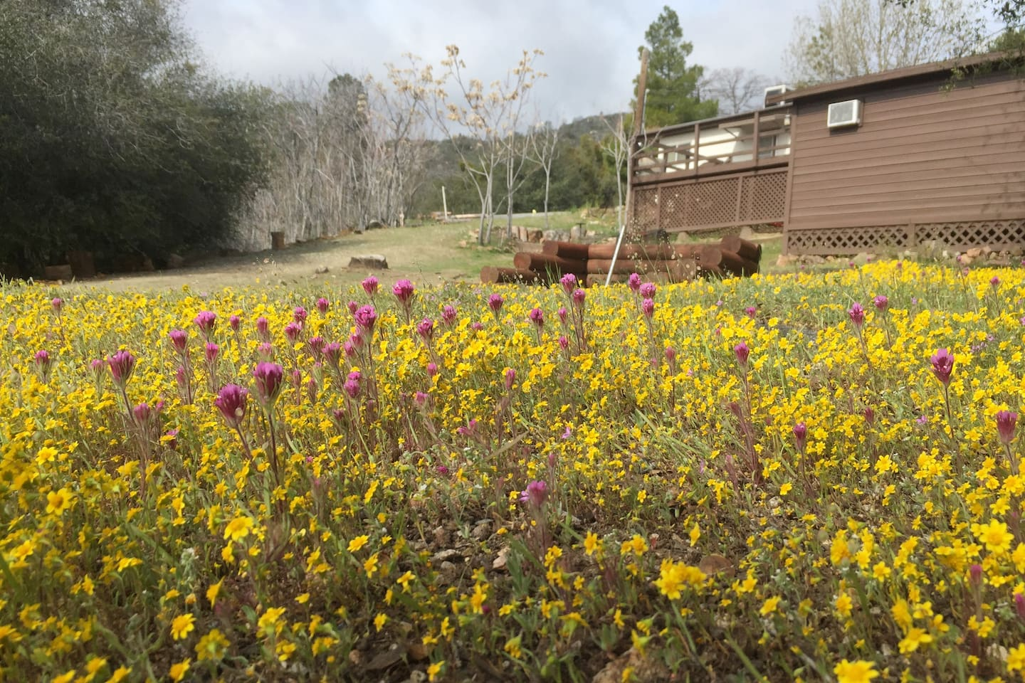 View from below of extra cabin and spring super bloom
