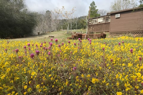 Shirley Creek Retreat: a Mountain Oasis