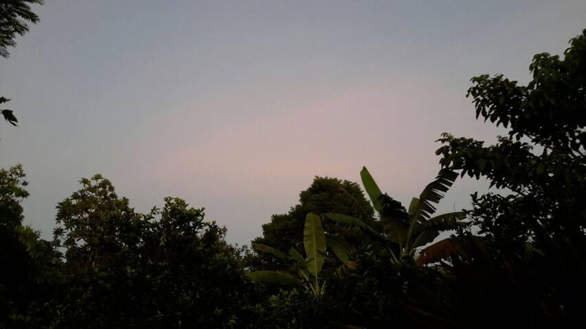 Vida verde, e ar puro na rota do Pantanal - Q3