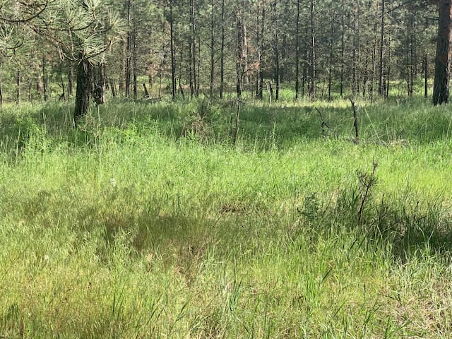 Shady Pines Camp Site 1 - 5 Lake Roosevelt, Wa.