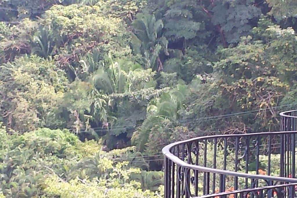 Vista desde uno de los balcones