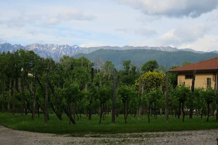 Cycling friendly paradise nestled in Vineyards - Tricesimo