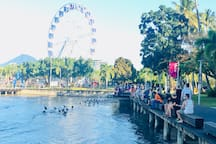 Hang out with the family of pelicans who roost on the edge of The Esplanade just across the street every day.