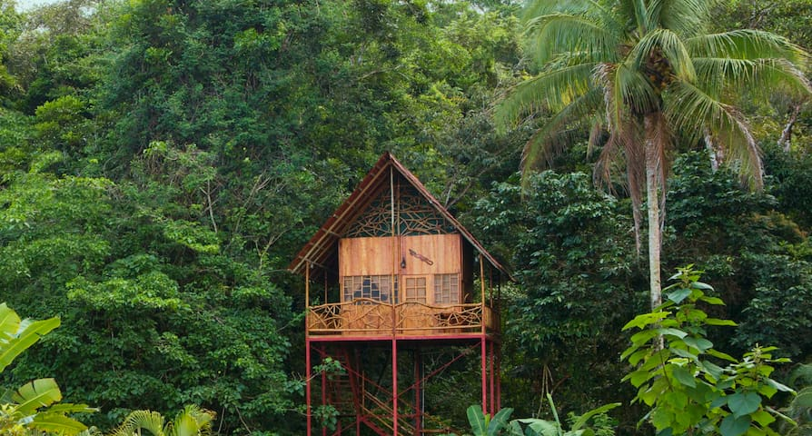 Rainforest Tree House w Hot Springs - Cooper - Trädhus