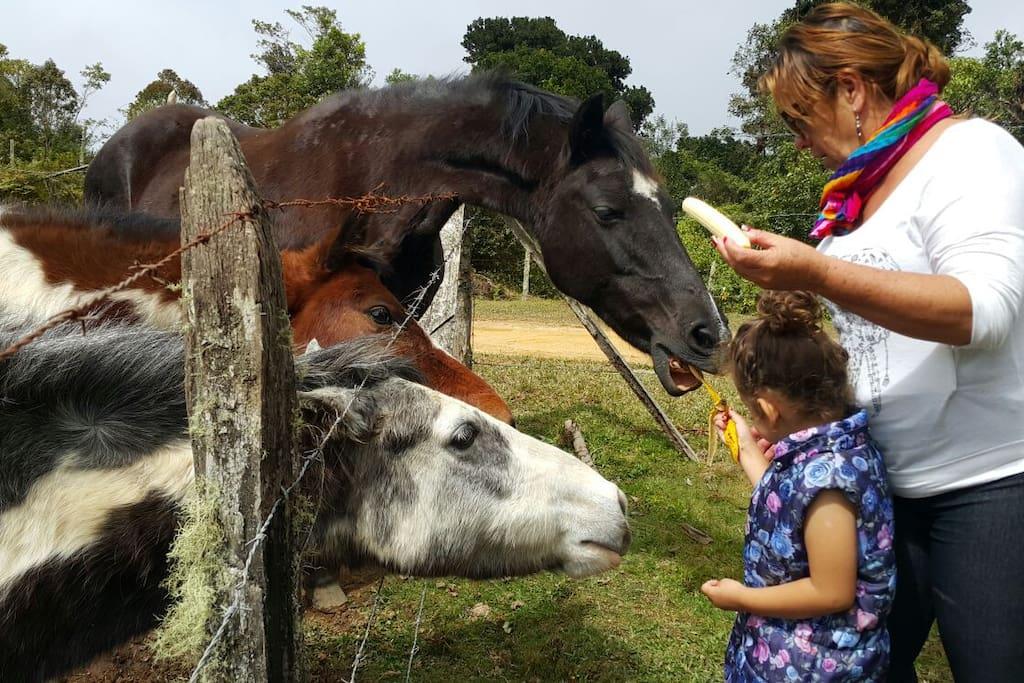 Alimentando a los caballos...