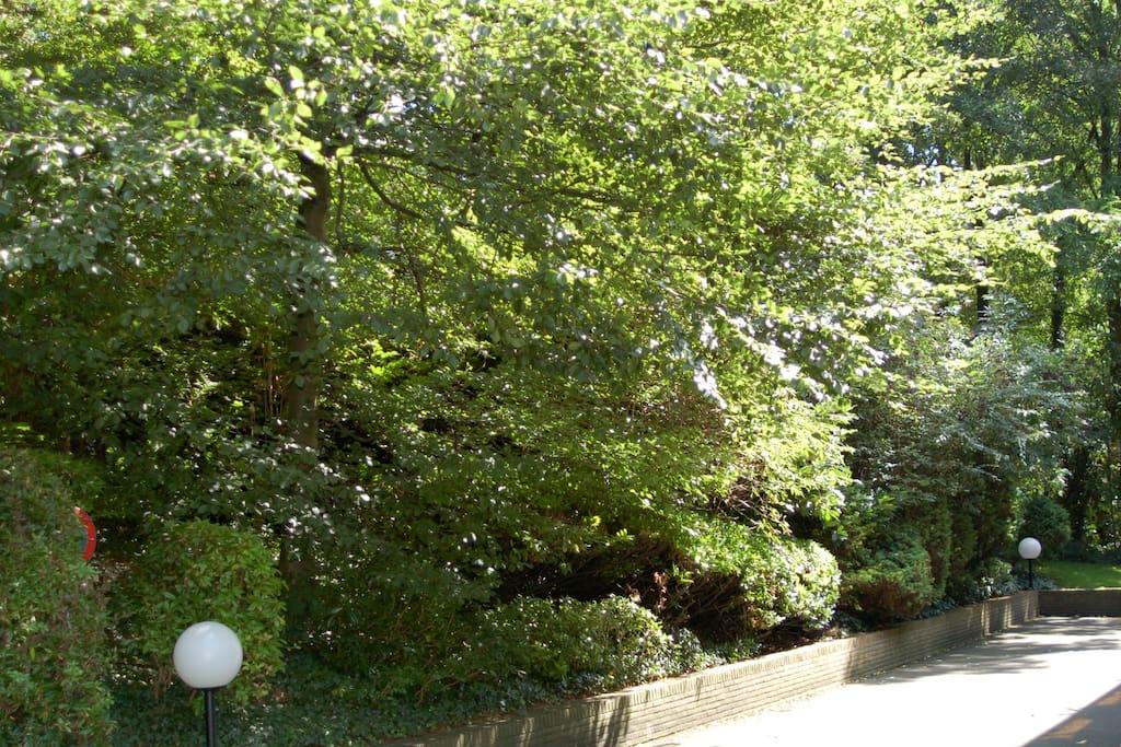 Parc verdoyant près de la piscine de Longchamp et du Royal Leopold Club de Belgique.