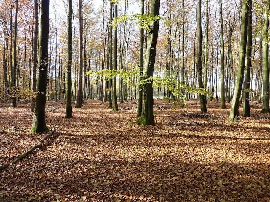 Possibilité de promenade en forêt